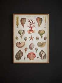 Poster Merveilles de la Mer