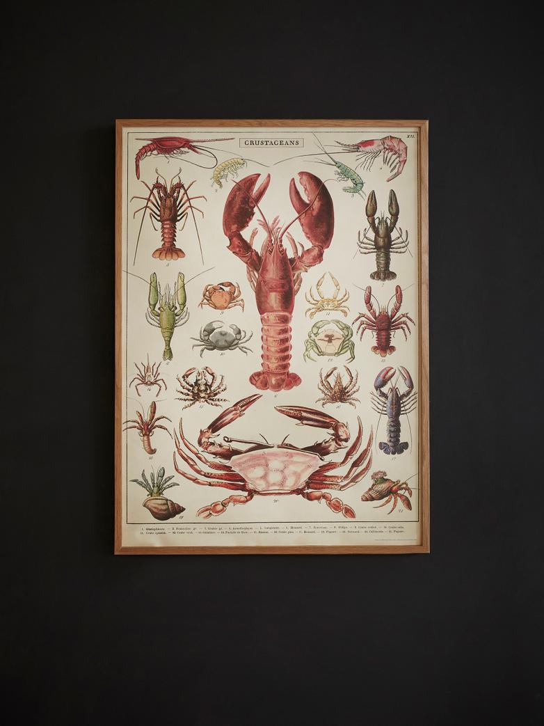 Poster Crustaceans