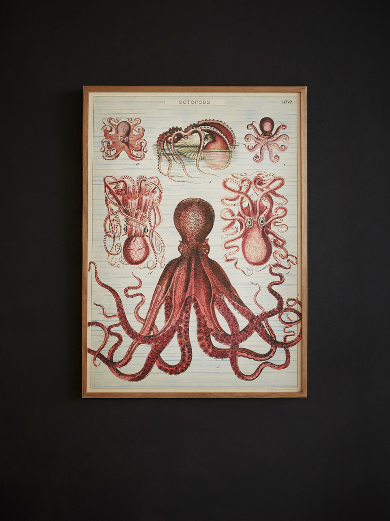 Poster Octopods