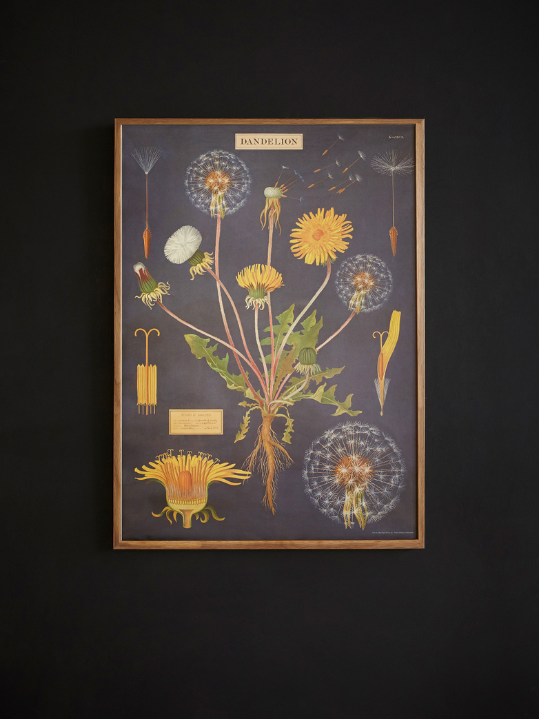 Poster Dandelion