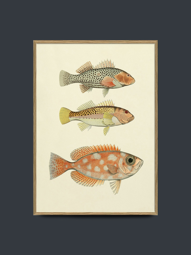 Fishes No. 3901P 50x70