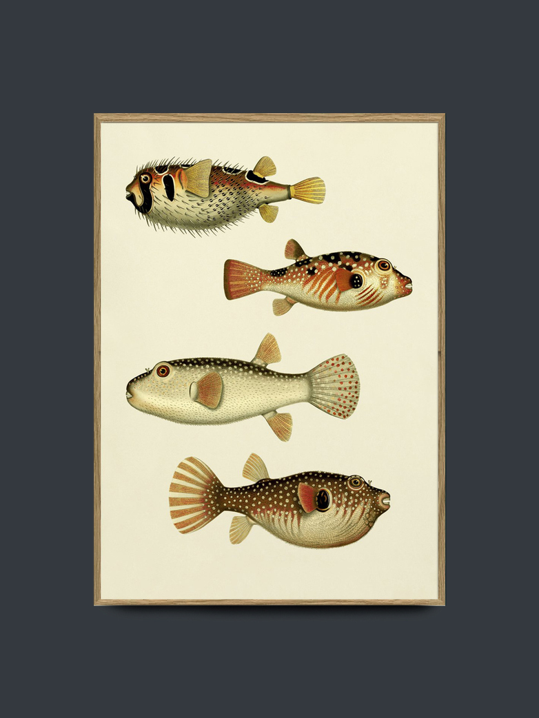 The Fishes No. 3909P 50x70