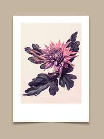 Chrysanthemum - 50x70 cm