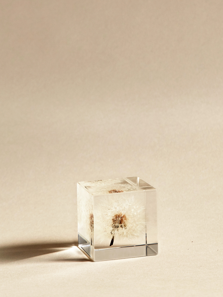 Dandelion Cube