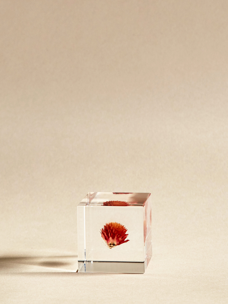 Globe Amaranth Cube