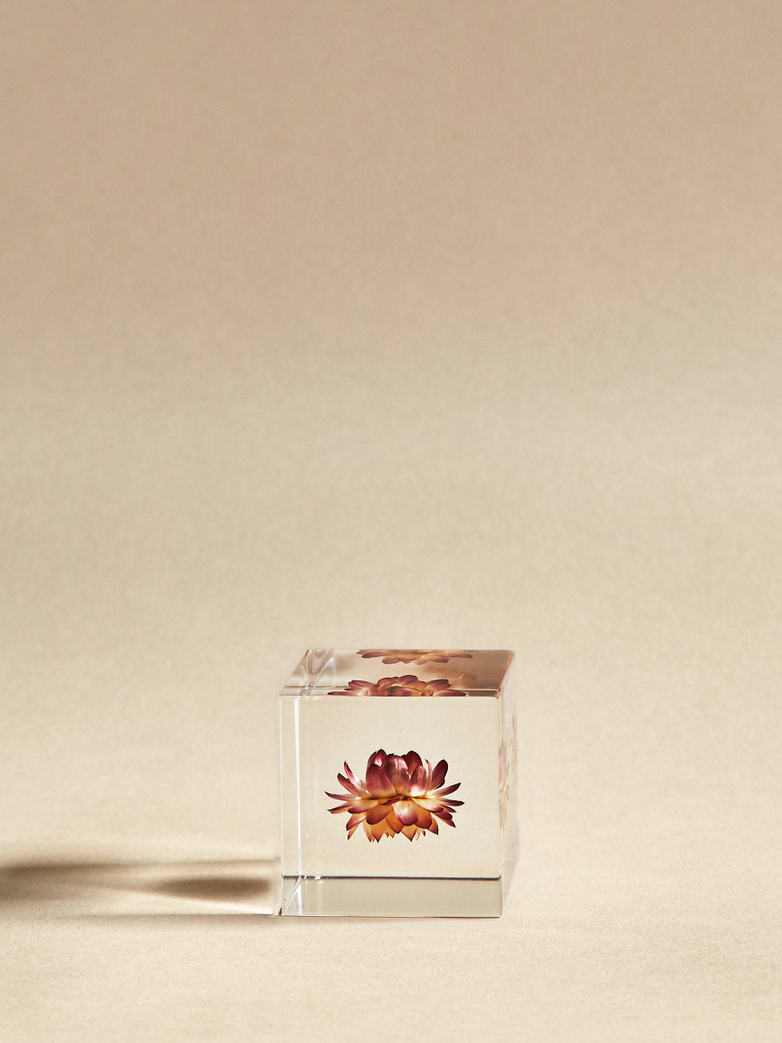 Strawflower Cube
