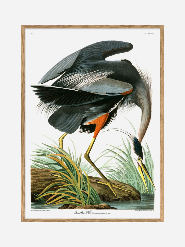 Great Blue Heron – 70 x 100