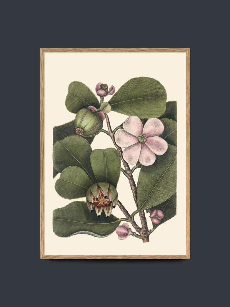 Balsam Tree – 50x70