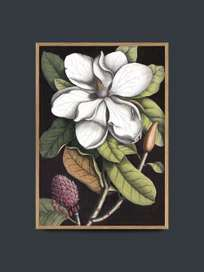Blooming White Magnolia – 50x70