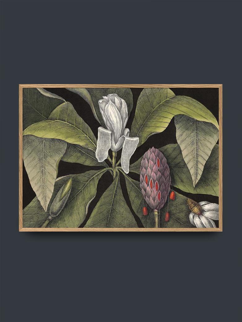 White Magnolia Bud – 50x70