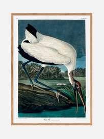 Wood Ibis – Sky Surfer
