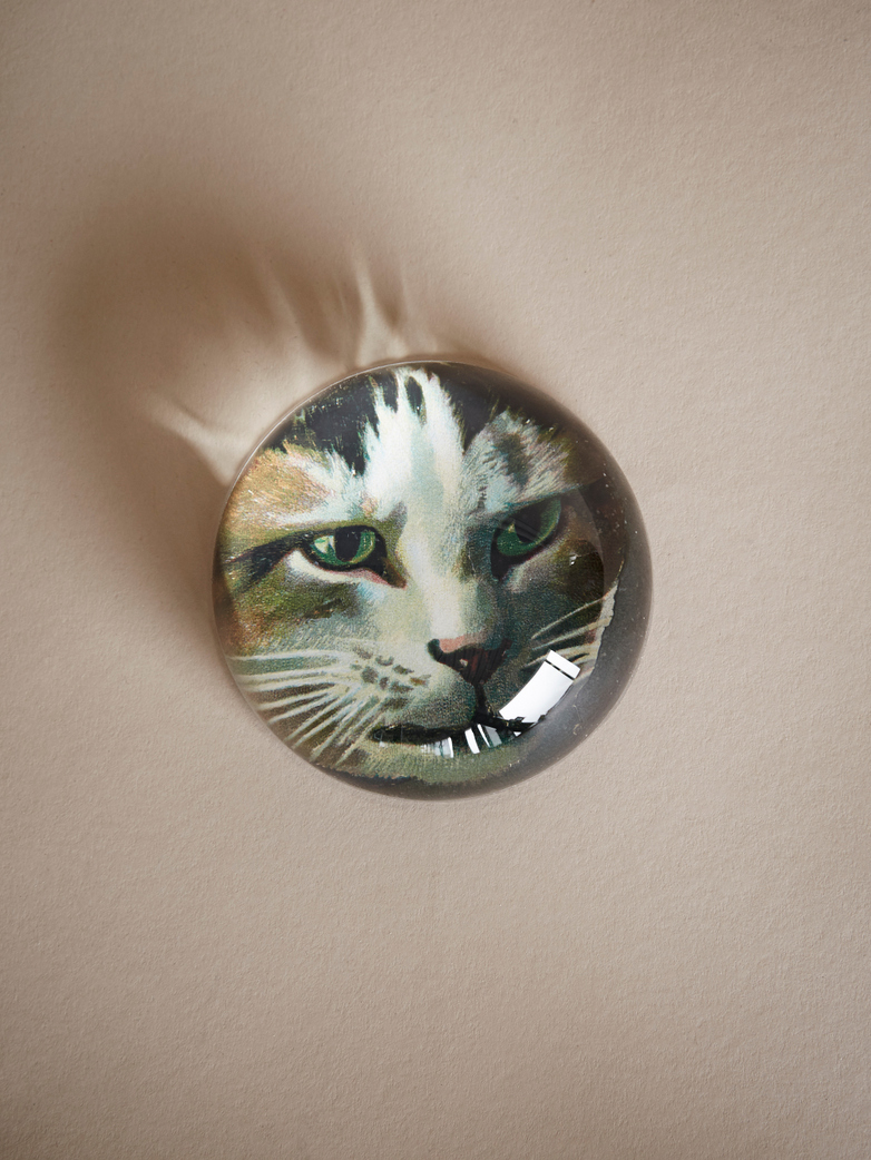 Paperweight Dome – Jack Cat