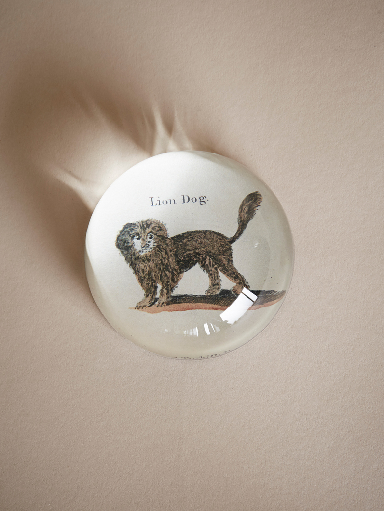 Paperweight Dome – Lion Dog