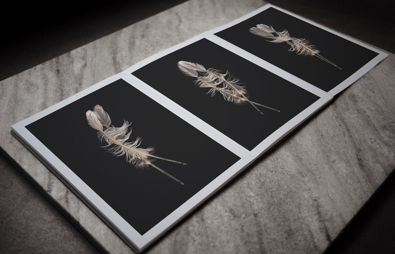 Artist Edition – Weight of A Feather