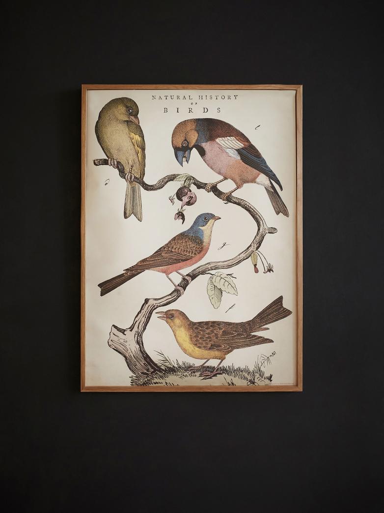 Poster Natural History Birds