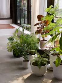 Collect Planter Pot Large - Ochre