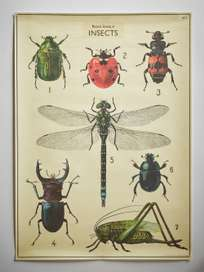 Poster Natural History of Insects