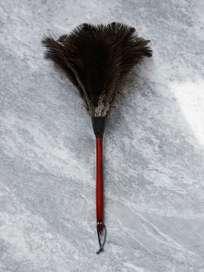 Feather Duster Beechwood - 50 cm