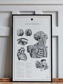 Anatomie No.2
